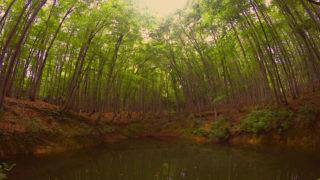 #39 美人林には実際に目に見える愛が存在しているの巻